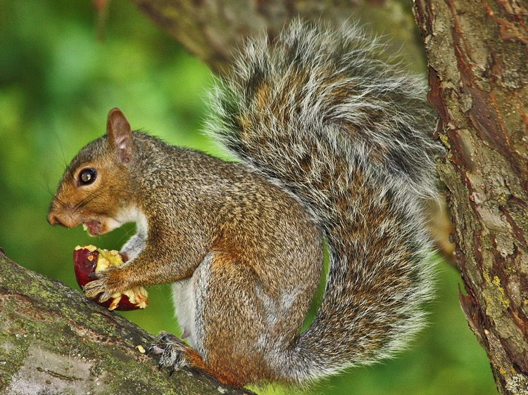 [2+snacking+squirrel-1+750]
