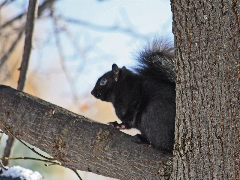 [squirrel++in+tree+2b]