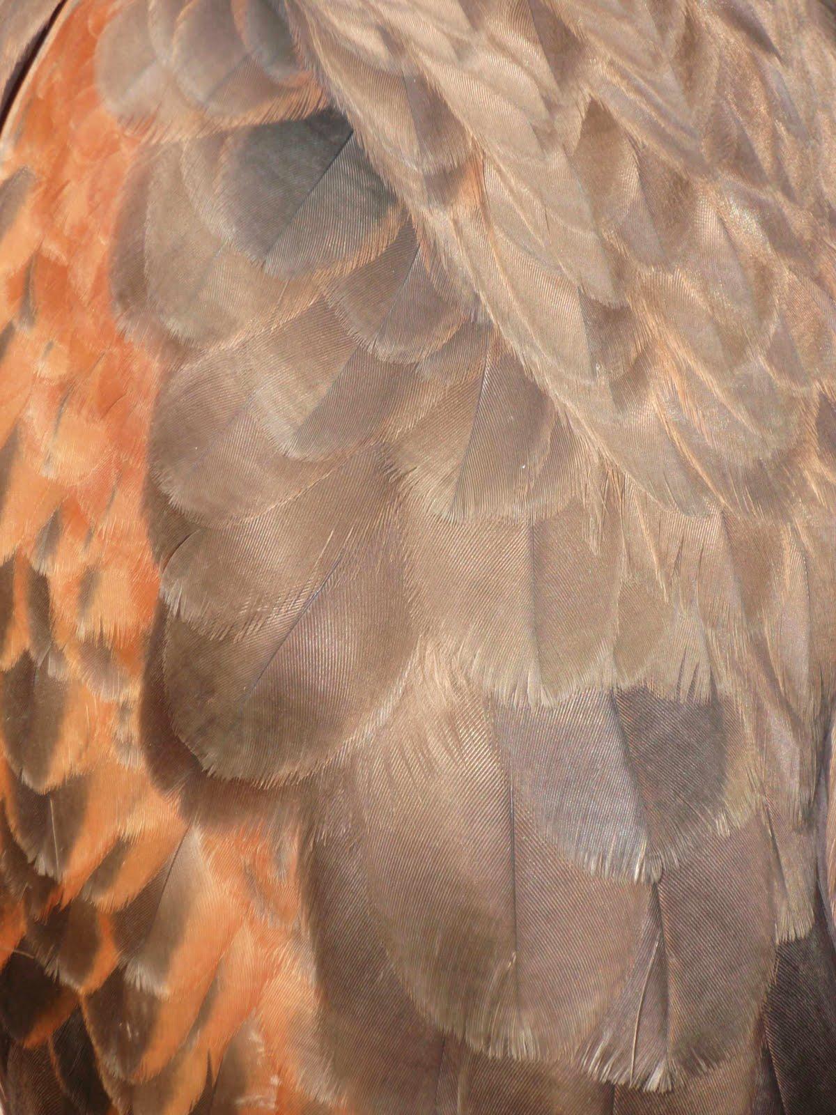Bird Feathers Close Up...