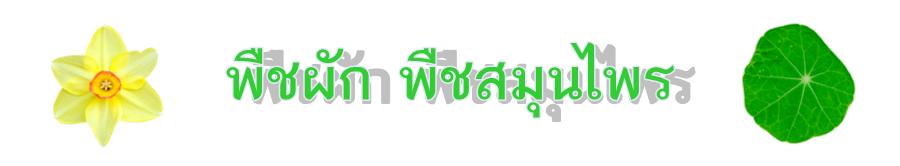 พืชผัก พืชสมุนไพร