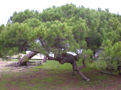 НАЦИОНАЛьНЫЙ ЗАПОВЕДНИК Кото-Доньяна, Уэльва,Андалусия