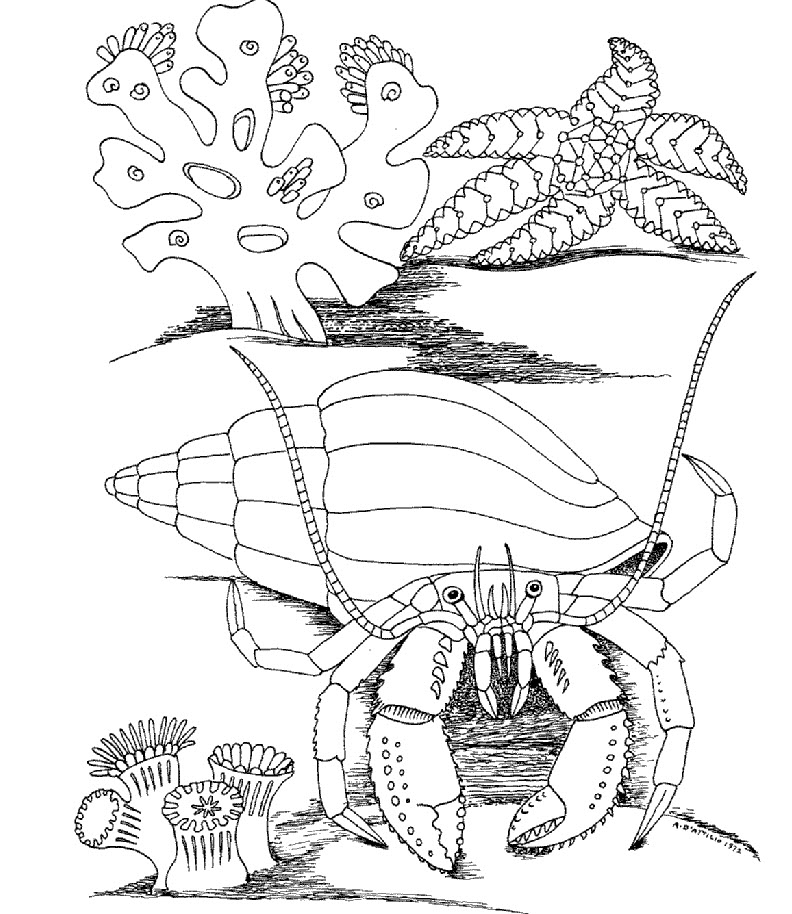 Kidsunder7 comclick on coloring page image