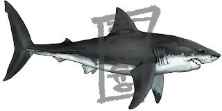 Sketchblog squali 2009 for Disegno squalo bianco