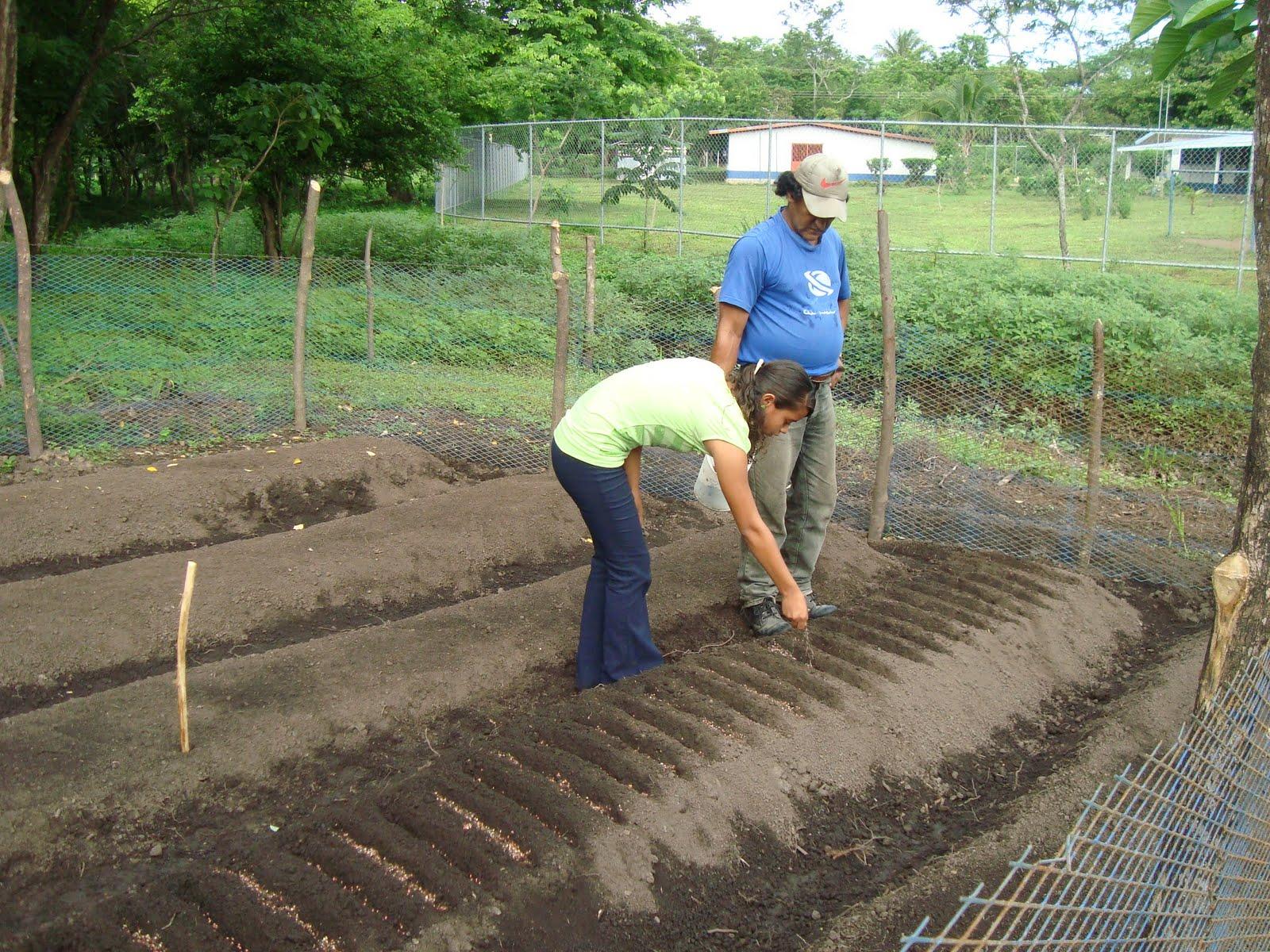 Escuela colonia bola os sembrando hortalizas - Preparacion de la tierra para sembrar ...