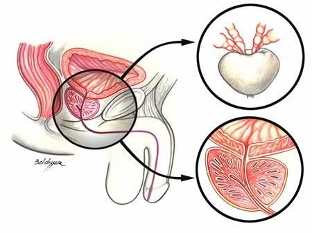 ducha masaje sexual masaje de próstata