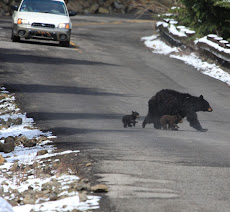 Mom and 2 Cubs head for safety