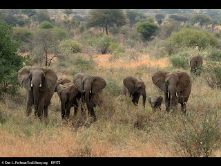 Wildlife Photography Art of Elephant Family Group From Africa