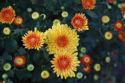 Orange and yellow flowers.