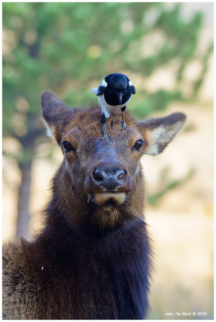 Nature Photography by John De Bord | Photography Blog