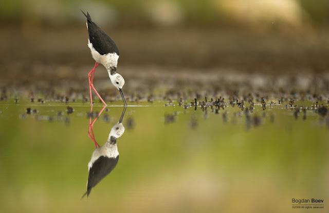 Animal Photography by Bogdan Boev   Photography Blog