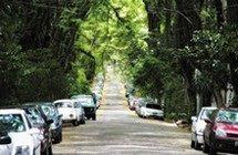 Árvores de Porto Alegre