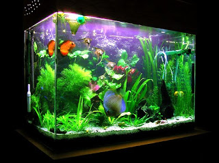 Pet advice how to set up your discus fish tank for Setting up a fish tank
