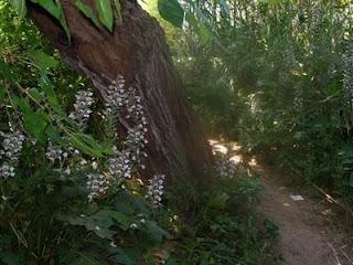 giardini della Kolimbetra