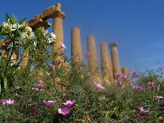 fiori al tempio di Giunone