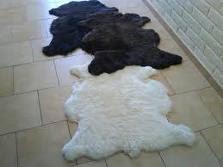 Cojinillos de oveja