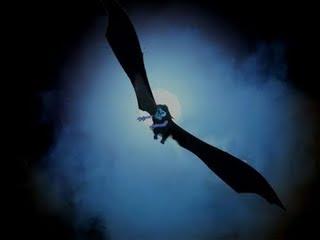 http://www.jadigitu.com/2012/12/kumpulan-hewan-paling-misterius-di-dunia.html