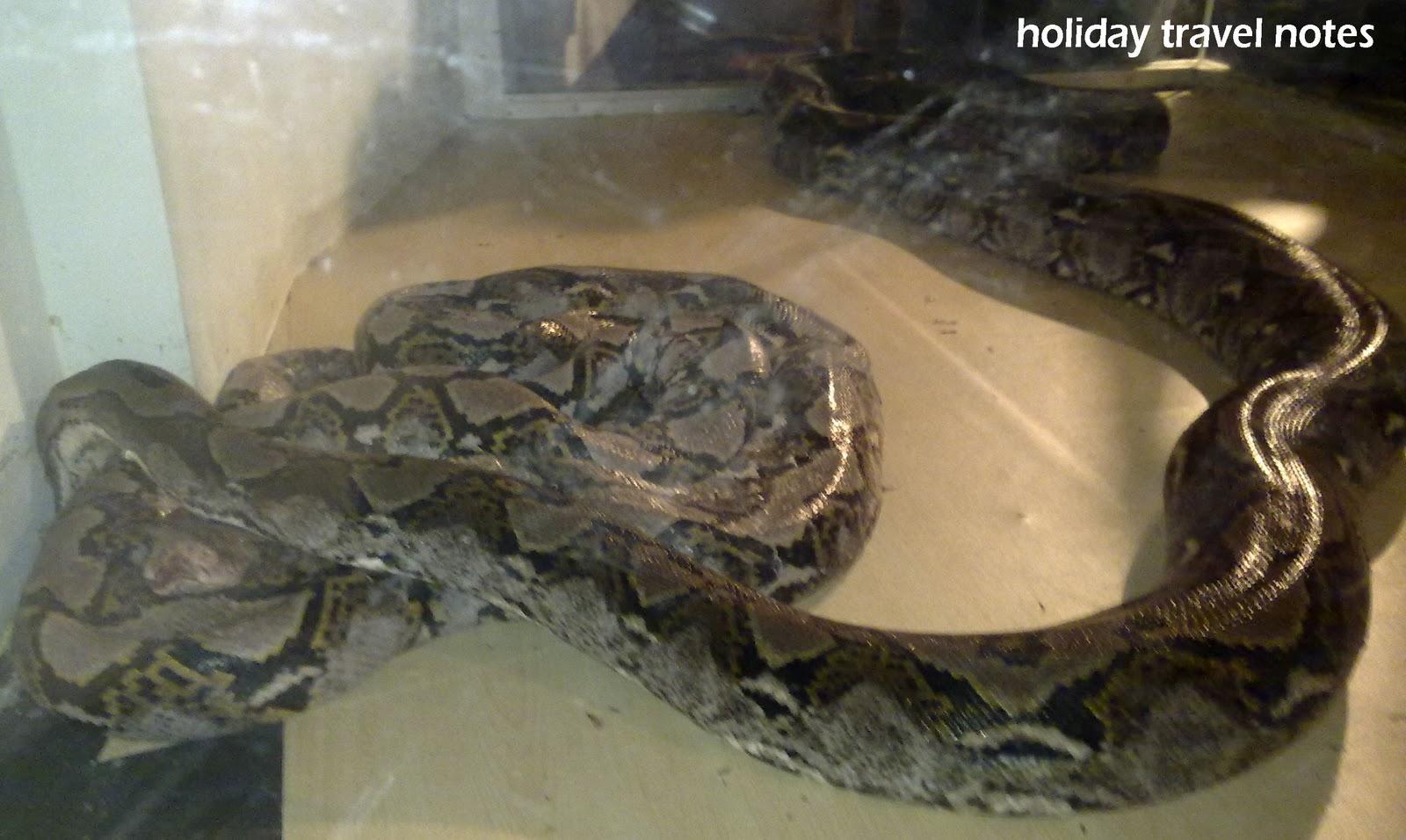 Holiday Travel Notes  Ular Vs Ular  Snake Vs Snake Exhibition