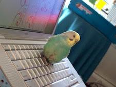 Max Blogging!