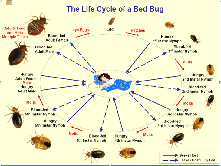 bed bugs history 2