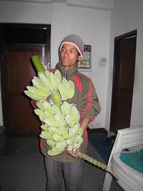 ネパールでもバナナがとれます