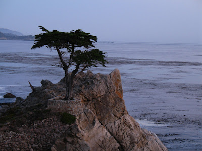 http://1.bp.blogspot.com/_Y9-9pUdrfsQ/TCAc3aC1tnI/AAAAAAAAAXs/-mqLBh7kmNs/s1600/20060730_Pebble+Beach+17-mile+Drive_42.JPG