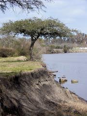 Esta foto es un regalo de nuestra amiga Irene. Barranca río Gualeguaychú, Entre Ríos (Argentina)