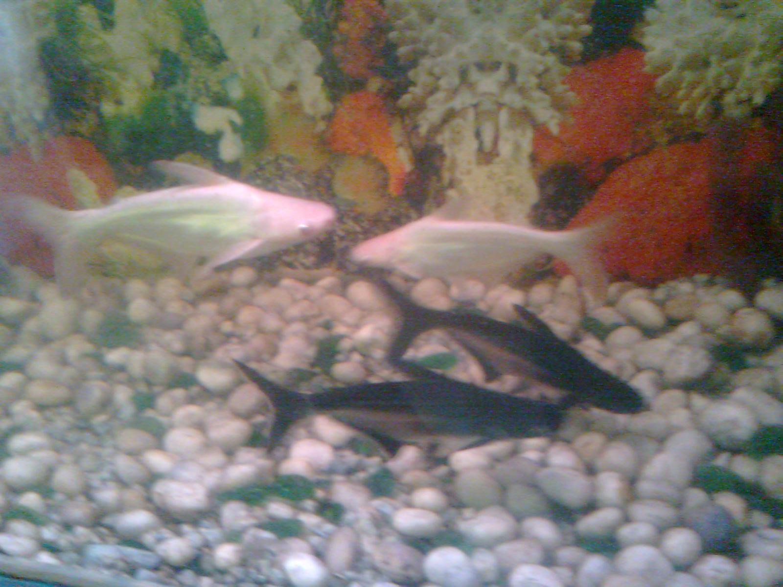 Fish aquarium in bhopal - Hundreds Of Children Visit Machli Ghar Daily To See Rare Tropical Fishes In This Fish Aquarium