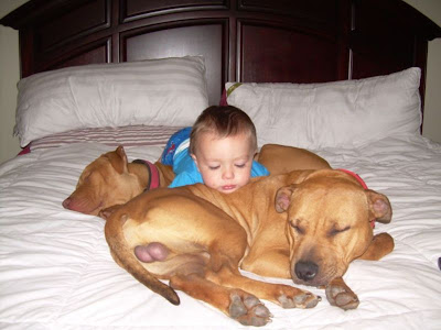 We Are Just Like You: True Nanny Dogs.....