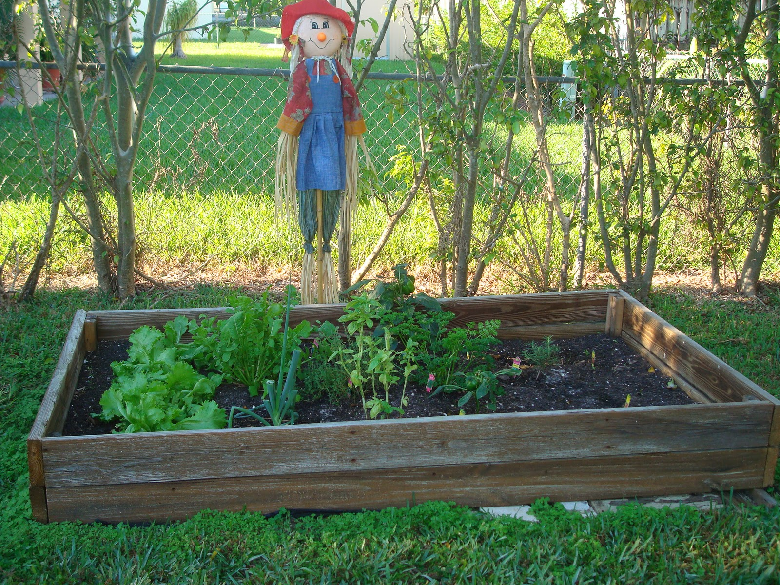 Miami and south florida green and leed homes for sale for Building a raised vegetable garden