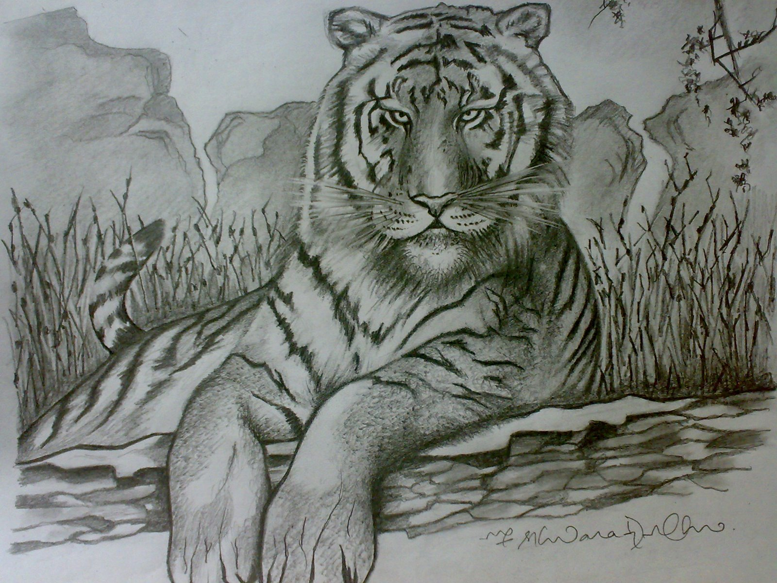 Ferrocious Feline - Tiger Claw - Lion - Animal Drawing forest jungle ... Jungle Drawing With Animals