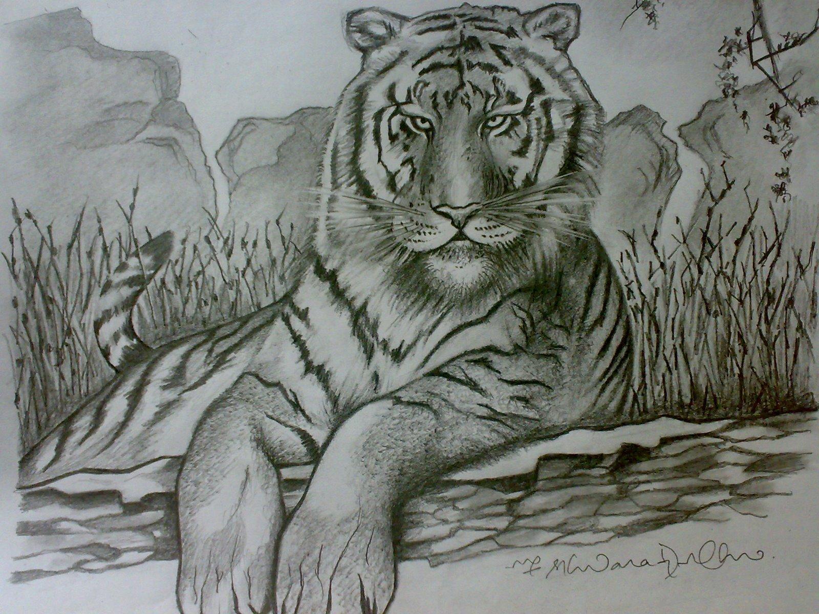 ferrocious feline u2013 tiger claw u2013 lion u2013 animal drawing forest