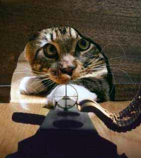 Regala una imagen al usuario de arriba... - Página 2 Cat_vs_mouse