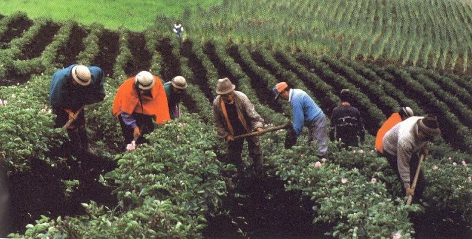 Terranova actividades econ micas for Que es la asociacion de cultivos