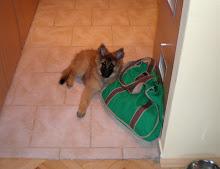 Guarding my bag...