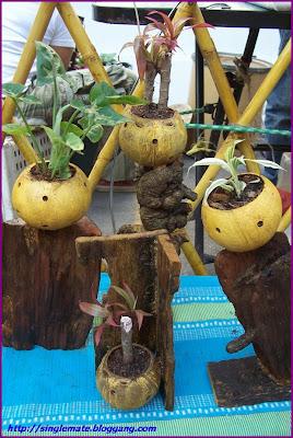 กระถางต้นไม้จากกะลามะพร้าว