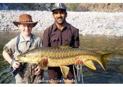 ปลา มาเซียร์