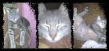 | kucing | kesayangan | ku |