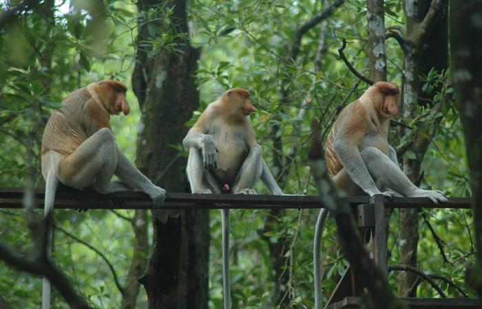 S Monkey Trial MUDAHNYA GEOGRAFI: MON...