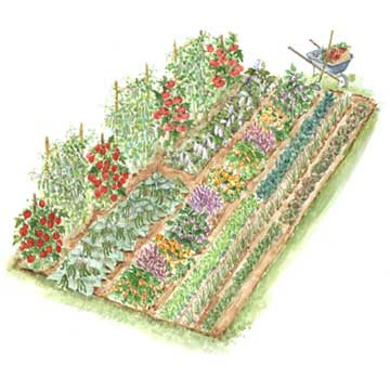 vegetable garden