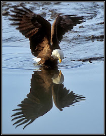 The Eagles Reflection
