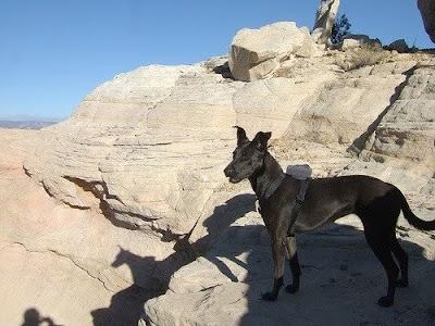 Dog GPS Locators