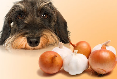 Dog Food Dangerous
