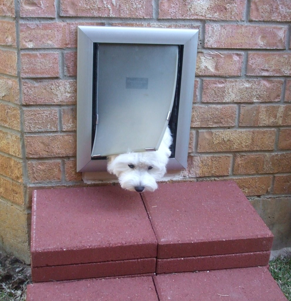 Petsafe Pet Door & Petsafe Pet Doors - The Best Quality Cat and Doggie Doors From the ... pezcame.com