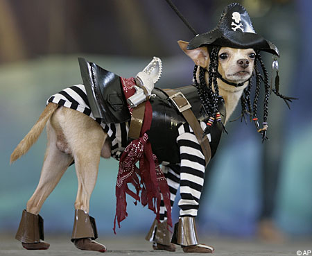 2010 Trendy Dog Halloween Costumes Pictures Of Dogs And