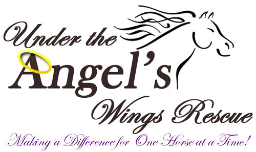 Under the Angel&#39;s Wings Rescue