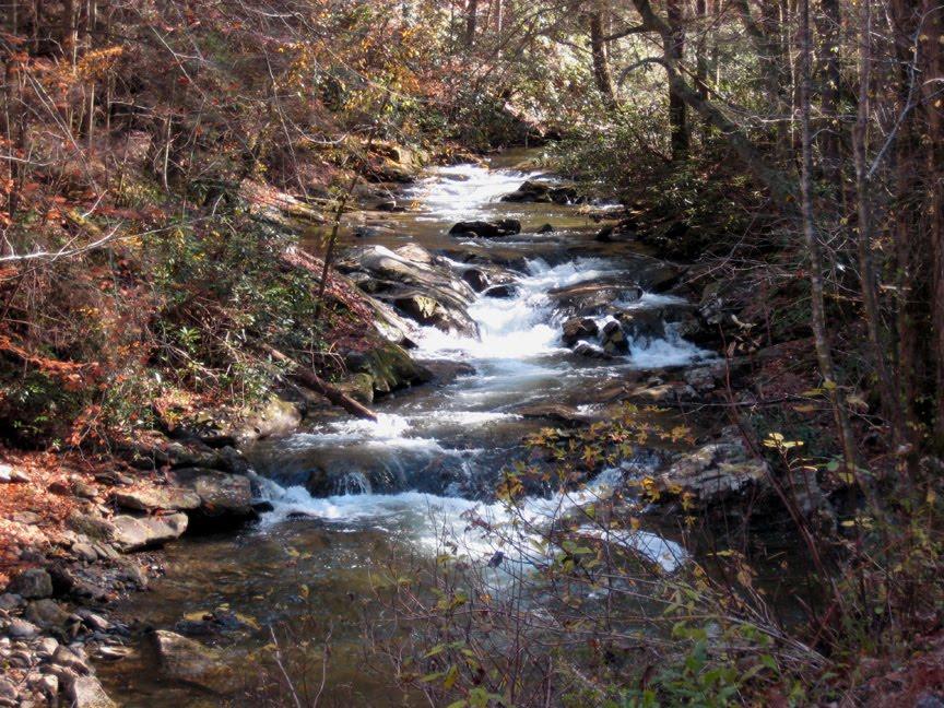 [Smith+Creek,+USFS+Road+22,+TN.JPG]