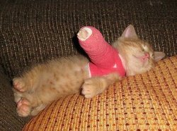 Cat In Cast