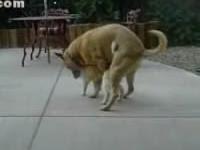 Dog Fucking Cat