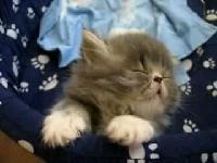 貓咪聽說可以這麼睡耶
