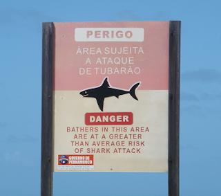 Um York em Pernambuco (em fotos). Tubarao